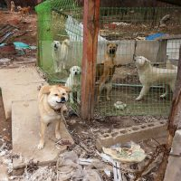 Chicken Farm Dogs Before Being Rescued