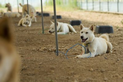 Chicken farm dogs recued