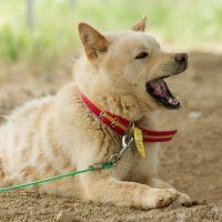 Terry_chicken farm dog