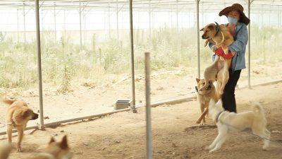 Jinoak caring a dog to a vet