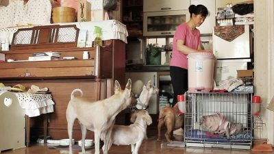 Jinoak and her dogs