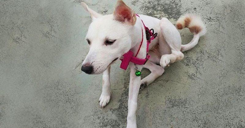 Adopt Coco