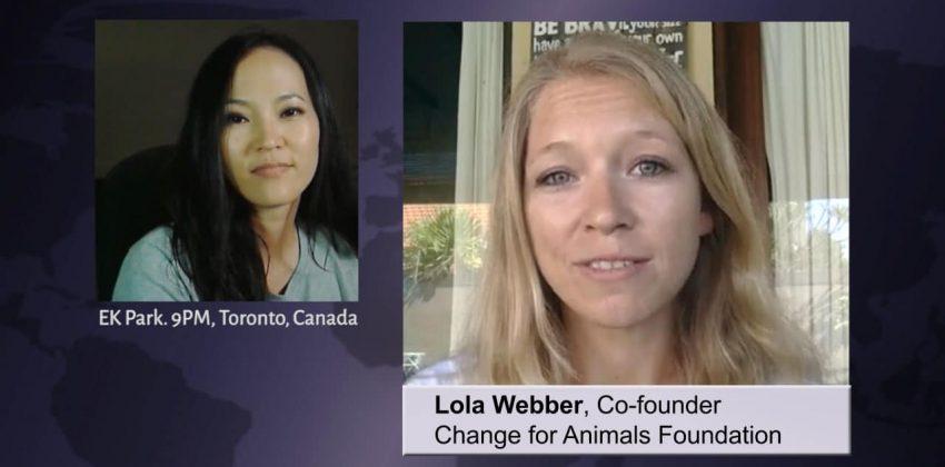 Lola Webber on the Korean Dog Meat Trade
