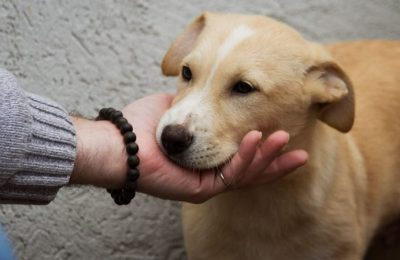 Join Us to Save More Dogs in Korea