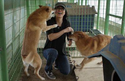 EK Having Fun with the Chicken Farm Dogs in Korea