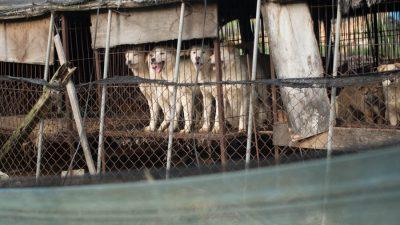 A dog meat farm in Korea