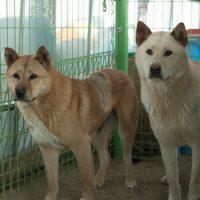 Rina and Nero_ Gin Oak shelter
