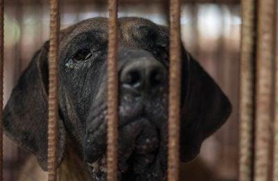 Dog Meat Farm Closed