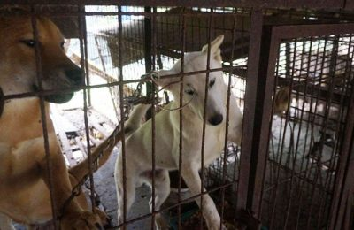 Join the Campaign, Stop the Dog and Cat Meat Trade in Korea