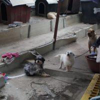 Maseok animal shelter