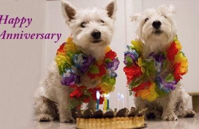 Happy First Birthday Free Korean Dogs