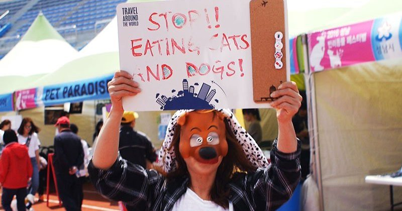 Protest to End the Korean Dog Meat Trade