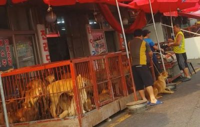Dogs in Cages at a Dog Meat Market