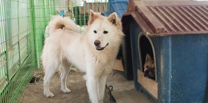 Free Korean Dogs Shelter
