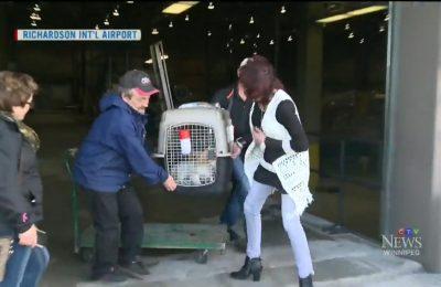 Korean Rescue Dogs Land in Winnipeg