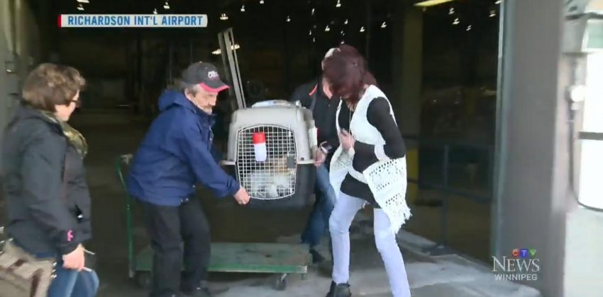 Korean Rescue Dogs Land in Winnipeg