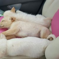Sleepy babies in the car