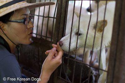 EK comforts a dog at the Jeonju dog farm