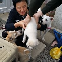 Bath time for the Jeju Puppies