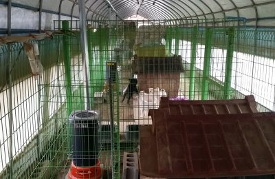 Winterizing Underway at Our Korean Shelter