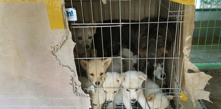 19 Dogs Rescued from Jeju Island