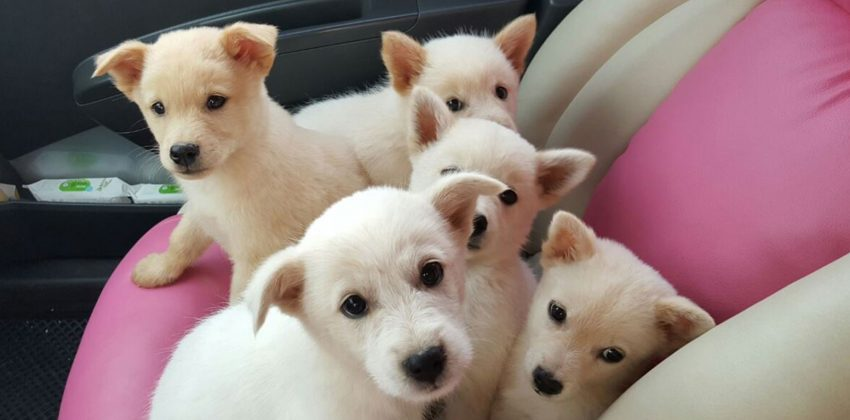 Jeju Island Rescue Puppies