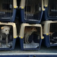 Jeonju rescue dogs on their way