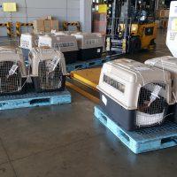 Jeonju rescue dogs flying to Washington, DC