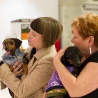 Hoi and Sidney, puppy mill survivors