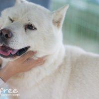 Jeonju dog at the shelter