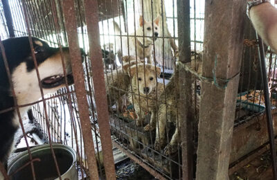 Jeonju Dog Farm Destroyed, Dogs Adopted