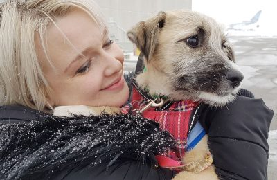 Four Korean Rescue Dogs Arrived in Toronto