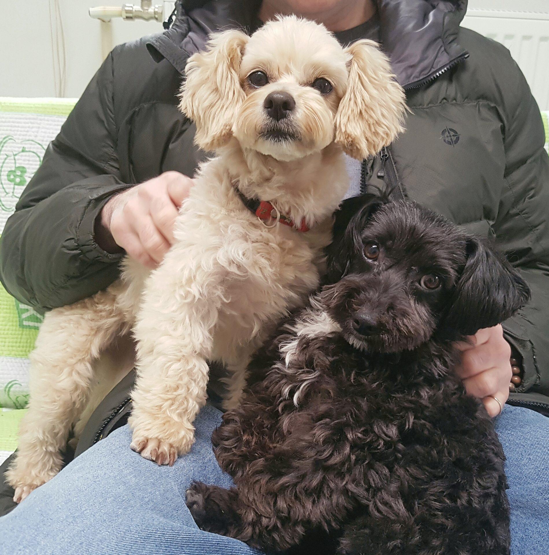 Free Korean Dogs