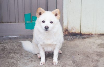 Salsal, F, 5yr old, 6kg