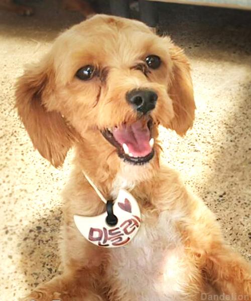 Free Dog Adoption Nyc