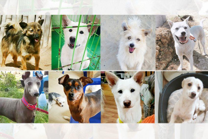 Toronto Adoption Event