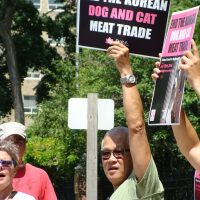 Toronto Protest against Korea's dog meat trade