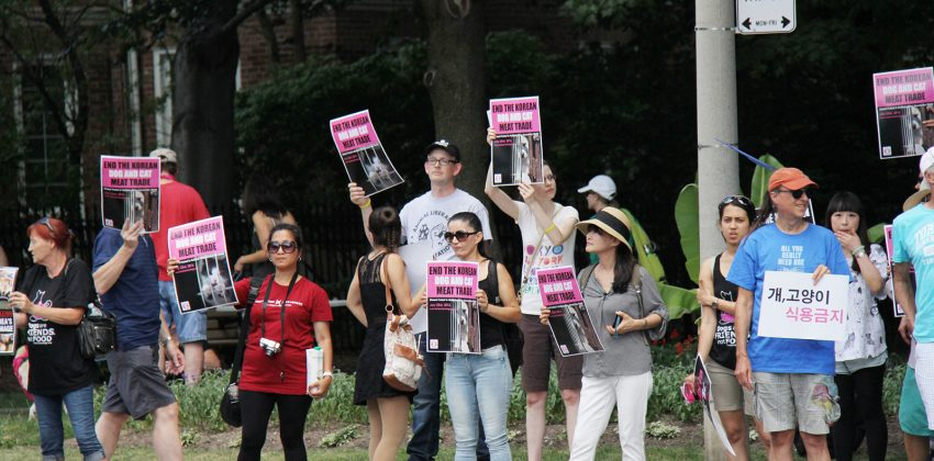 Second Annual Toronto Boknal Protest