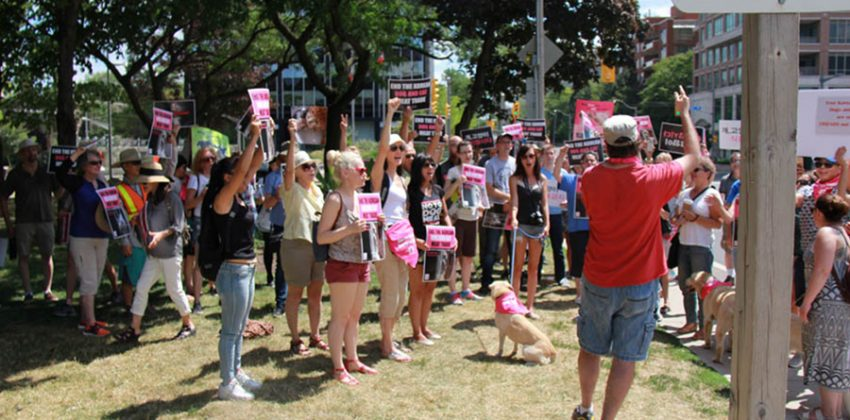 Toronto Protest Against Korea's Dog and Cat Meat Trade