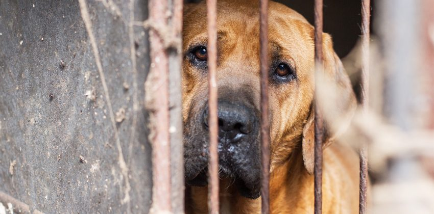 Dog Meat Farming Research Released