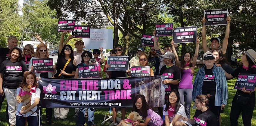 2017 Toronto Protest aginst the Dog and Cat Meat Trade