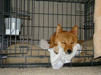 Adopting Korean Rescue Dogs: Dog in Crate