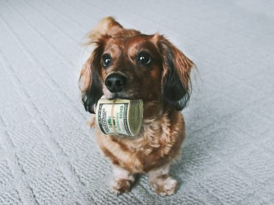 Adopting Korean Rescue Dogs: Dog with Money
