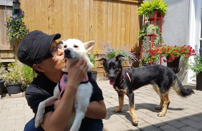 5 Questions to Consider Before Adopting Korean Rescue Dogs