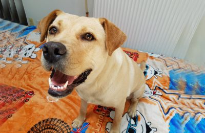 Help Us Find a Forever Home for Matilda