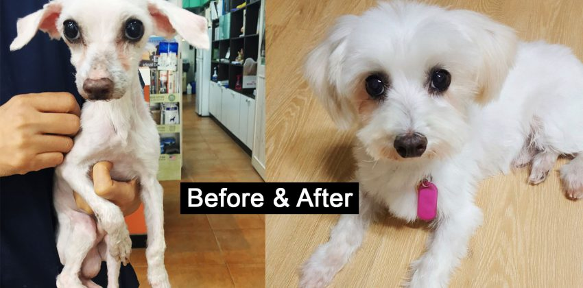 Help This Puppy Mill Survivor