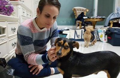 Winter Olympics Highlights Dog Meat Trade