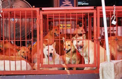A Huge Milestone: Killing Dogs for Meat is Illegal