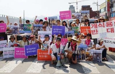 Celebrating Canada Day & Free Korean Dogs' 3rd Anniversary!