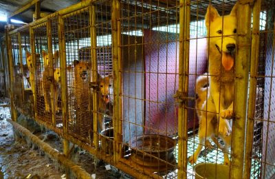 Help Us Demolish a Korean Dog Meat Farm